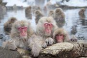 Viaggi Sport Giappone Sci e Cultura Nagano Snow Monkeys